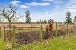 Photo 11: 21780 64 AVENUE in Langley: Salmon River House for sale : MLS®# R2545354