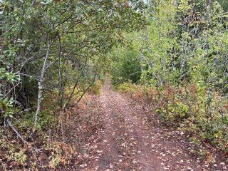 Photo 16: 292 Terry Road, in Enderby: Vacant Land for sale : MLS®# 10239679
