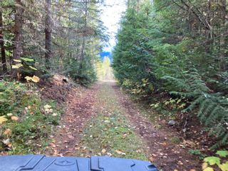 Photo 11: DL3592 & DL4084 1020 Forest Service Road in Seymour Arm: syemour arm Land Only for sale (shuswap)  : MLS®# 10241424