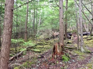 Photo 13: 3,4,6 Armstrong Road in Eagle Bay: Vacant Land for sale : MLS®# 10133907