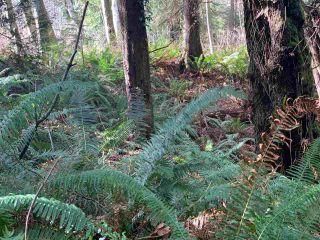 Photo 20: 5852 MARINE Way in Sechelt: Sechelt District Land for sale (Sunshine Coast)  : MLS®# R2545877