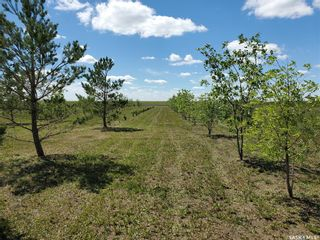 Photo 3: Horsnall Acreage in Moose Jaw: Lot/Land for sale (Moose Jaw Rm No. 161)  : MLS®# SK844416