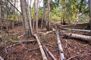 Photo 11: Lot 41 Klondike Trail: Anglemont Vacant Land for sale (North Shuswap)  : MLS®# 10228883