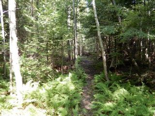 Photo 6: Lot West River Drive in Durham: 108-Rural Pictou County Vacant Land for sale (Northern Region)  : MLS®# 202122246