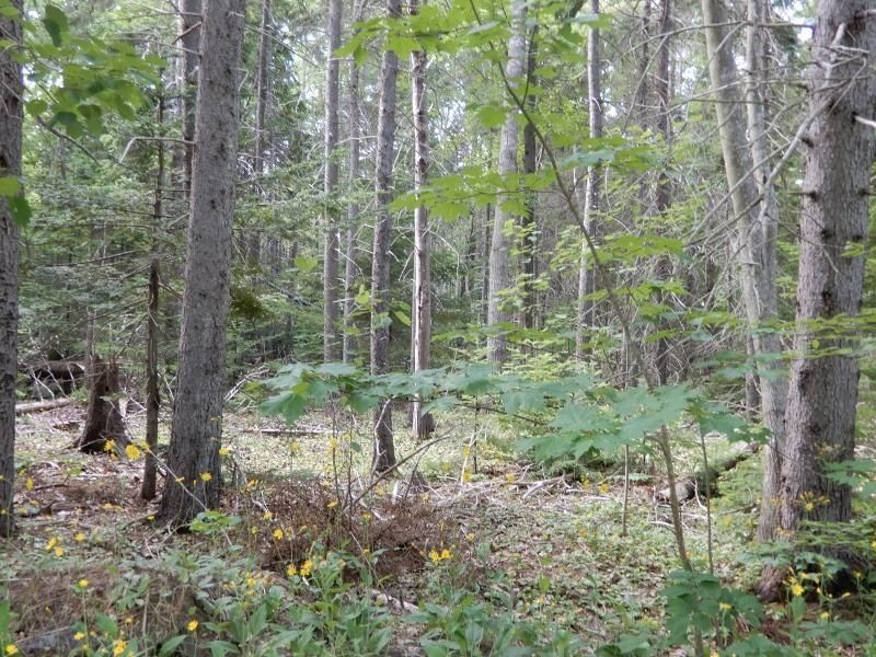 Main Photo: Pictou Landing Road in Pictou Landing: 108-Rural Pictou County Vacant Land for sale (Northern Region)  : MLS®# 202118664