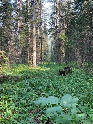 Photo 14: .. None: Bragg Creek Residential Land for sale : MLS®# A1131758