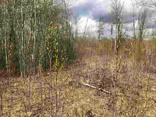 Photo 4: 85 15065 Twp Rd 470: Rural Wetaskiwin County Rural Land/Vacant Lot for sale : MLS®# E4243878