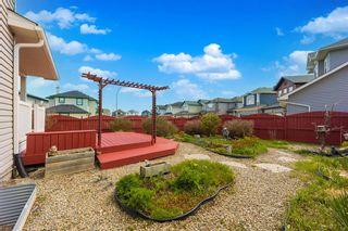Photo 39: 185 Saddlecreek Point NE in Calgary: Saddle Ridge Detached for sale : MLS®# A1113221