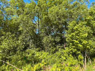 Photo 6: River John Road in Sundridge: 108-Rural Pictou County Vacant Land for sale (Northern Region)  : MLS®# 202115166
