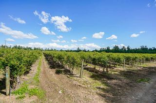 Photo 12: 21.44AC 240 STREET in Langley: Langley City Agri-Business for sale : MLS®# C8038637