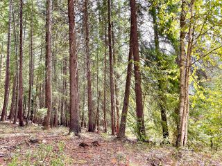 Photo 27: 1969 SANDY ROAD in Castlegar: Vacant Land for sale : MLS®# 2461033