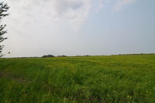 Photo 4: Range Rd 181 & Township Rd 559: Rural Lamont County Rural Land/Vacant Lot for sale : MLS®# E4258172