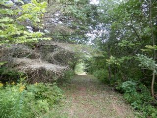 Photo 6: Salem Road in Greenhill: 108-Rural Pictou County Vacant Land for sale (Northern Region)  : MLS®# 202121181