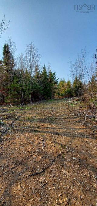 Photo 22: 5248 Port Morien Drive in Round Island: 207-C. B. County Vacant Land for sale (Cape Breton)  : MLS®# 202120892