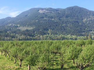Photo 2: 47805 BALLAM Road in Chilliwack: Fairfield Island Agri-Business for sale : MLS®# C8033737