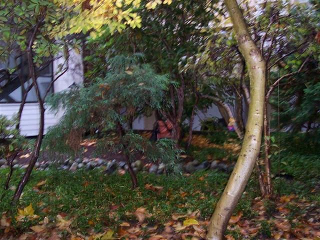 Photo 4: Photos: #110 - 2910 E PENDER ST in VANCOUVER: Renfrew VE Condo for sale (Vancouver East)  : MLS®# R2019101
