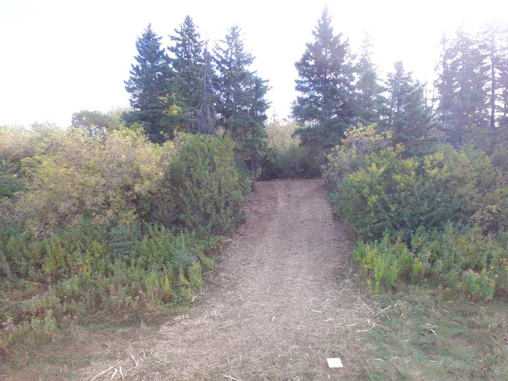 Photo 7: Photos: N1/2 SE19-57-1-W5: Rural Barrhead County Rural Land/Vacant Lot for sale : MLS®# E4217154