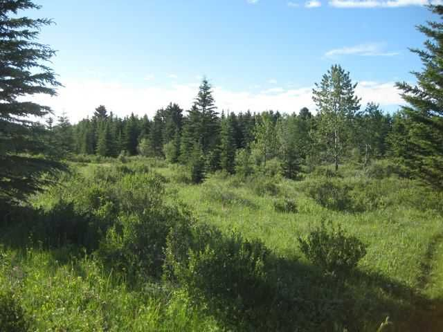 Main Photo: 12 KMS NORTH ON COCHRANE in COCHRANE: Rural Rocky View MD Rural Land for sale : MLS®# C3526638