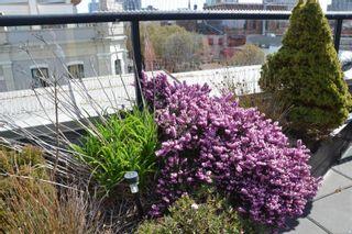 Photo 24: 319 599 Pandora Ave in : Vi Downtown Condo for sale (Victoria)  : MLS®# 871729