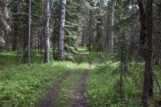 Photo 18: 7350 584 highway: Rural Mountain View County Detached for sale : MLS®# A1101573