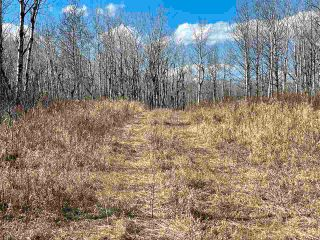 Photo 2: : Rural Westlock County Rural Land/Vacant Lot for sale : MLS®# E4241457