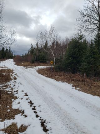 Photo 2: Lot Melrose Country Harbour Road in Country Harbour: 303-Guysborough County Vacant Land for sale (Highland Region)  : MLS®# 202104065
