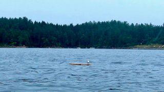 Photo 11: Lt 15 Ruxton (Off) Rd in : Isl Ruxton Island Land for sale (Islands)  : MLS®# 877629
