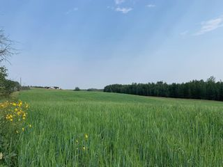 Photo 5: Hwy 616 RR 10: Rural Wetaskiwin County Rural Land/Vacant Lot for sale : MLS®# E4258071