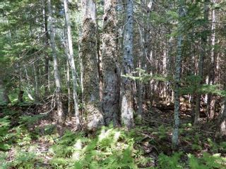 Photo 5: Lot West River Drive in Durham: 108-Rural Pictou County Vacant Land for sale (Northern Region)  : MLS®# 202122246