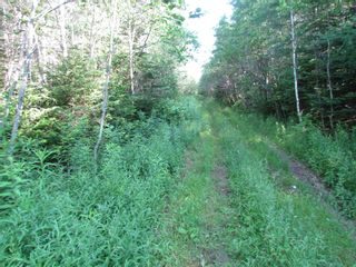 Photo 9: 236 Highway Highway in Kennetcook: 105-East Hants/Colchester West Vacant Land for sale (Halifax-Dartmouth)  : MLS®# 202116831