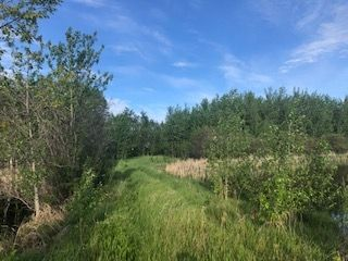 Photo 5: Range Road 233 TWP 520 NW: Rural Strathcona County Rural Land/Vacant Lot for sale : MLS®# E4179287