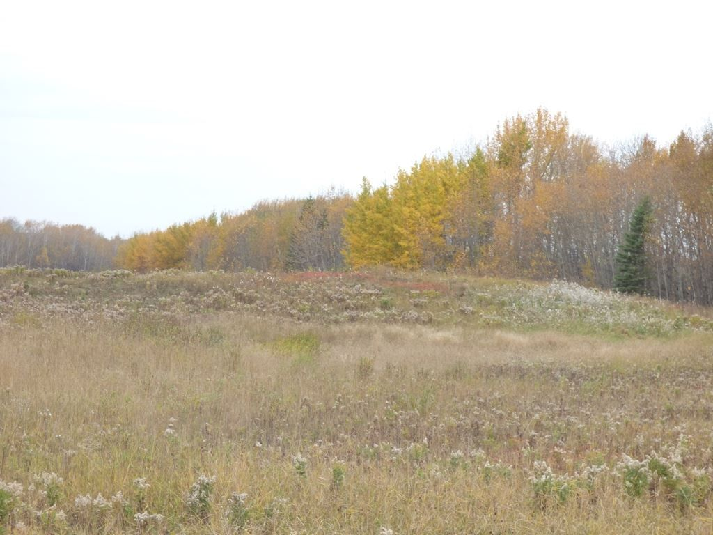 Photo 17: Photos: N1/2 SE19-57-1-W5: Rural Barrhead County Rural Land/Vacant Lot for sale : MLS®# E4217154