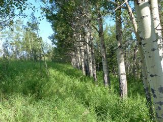 Photo 14: 224061 274 Avenue W: Rural Foothills County Residential Land for sale : MLS®# A1095002