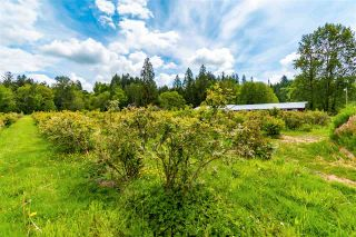 Photo 14: 24250 88 Avenue in Langley: County Line Glen Valley House for sale : MLS®# R2580545