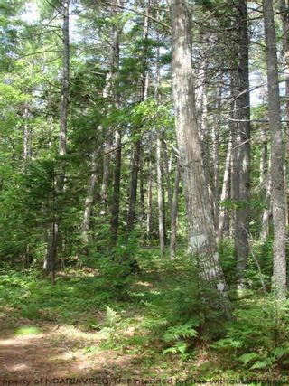 Photo 11: Lot 11 RAFUSE POINT Road in Pleasantville: 405-Lunenburg County Vacant Land for sale (South Shore)  : MLS®# 202122075