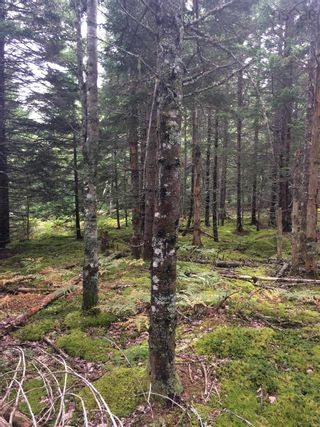 Photo 2: Lot X- 85R Beamish Road in East Uniacke: 105-East Hants/Colchester West Vacant Land for sale (Halifax-Dartmouth)  : MLS®# 202123580