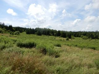 Photo 16: 299 New Lairg Road in New Lairg: 108-Rural Pictou County Vacant Land for sale (Northern Region)  : MLS®# 202117815
