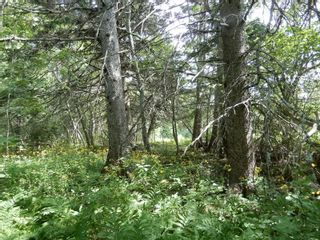 Photo 3: Pictou Landing Road in Pictou Landing: 108-Rural Pictou County Vacant Land for sale (Northern Region)  : MLS®# 202118660