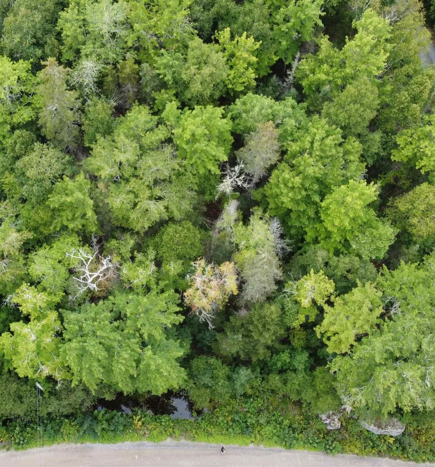 Main Photo: Lot 128 Pioneer Drive in Vaughan: 403-Hants County Vacant Land for sale (Annapolis Valley)  : MLS®# 202123784