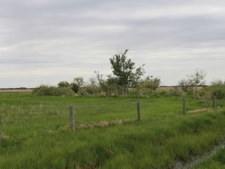 Photo 4: Rge Rd 181 Twp Rd 502: Rural Beaver County Rural Land/Vacant Lot for sale : MLS®# E4137438