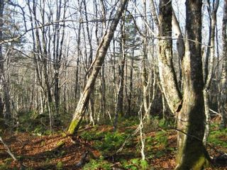 Photo 7: Lot Highway 107 in West Petpeswick: 35-Halifax County East Vacant Land for sale (Halifax-Dartmouth)  : MLS®# 202114068