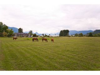 Photo 33: 15146 HARRIS Road in Pitt Meadows: North Meadows House for sale : MLS®# V899524