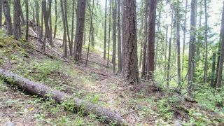 Photo 10: Lot B THOMPSON ROAD in Bonnington: Vacant Land for sale : MLS®# 2459440