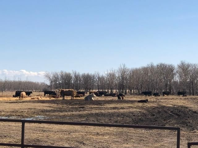 Main Photo: 0 20 Highway in Dauphin: R10 Farm for sale (R30 - Dauphin and Area)  : MLS®# 202008642