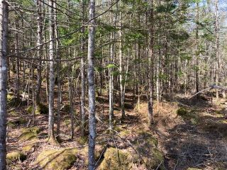 Photo 10: 65 Eaglet Lane in Musquodoboit Harbour: 35-Halifax County East Vacant Land for sale (Halifax-Dartmouth)  : MLS®# 202109854