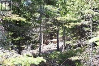 Photo 3: NA CONCESSION ROAD 9 RD in Tehkummah: Vacant Land for sale : MLS®# X5365128