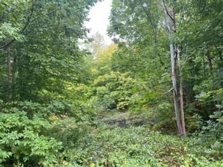 Photo 7: 1005 Heathbell Road in Scotch Hill: 108-Rural Pictou County Vacant Land for sale (Northern Region)  : MLS®# 202124669