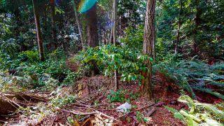 Photo 24: 1225 - 1227 ROBERTS CREEK Road: Roberts Creek House for sale (Sunshine Coast)  : MLS®# R2476356