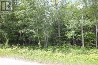 Photo 8: NA CONCESSION ROAD 9 RD in Tehkummah: Vacant Land for sale : MLS®# X5365128