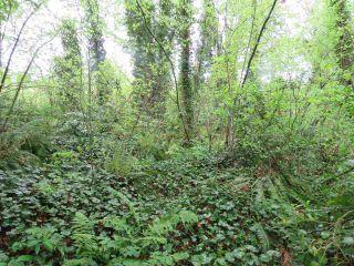 Photo 8: LOT 1 287TH Street in Maple Ridge: Whonnock Land for sale : MLS®# R2525499